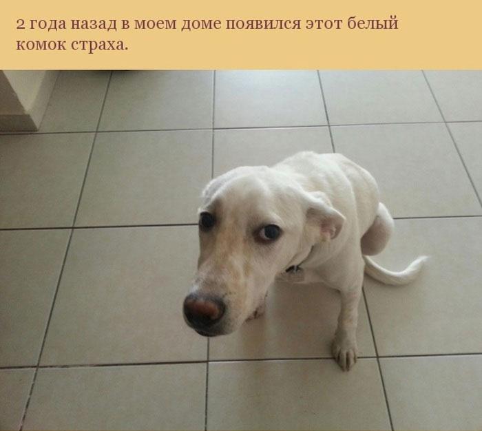 Собака спасла своего хозяина