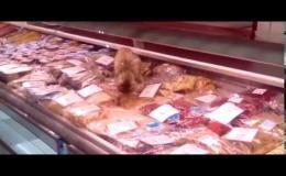 Кот поел из прилавка на 60,000 рублей