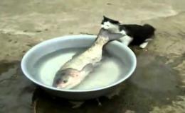 Кот рыбачит