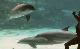 Девушка развлекает дельфина