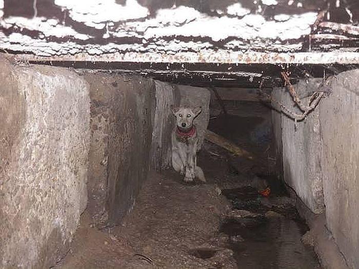 Спасение собаки по кличке Баночка