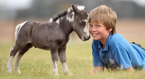 Очаровательные мини-лошади