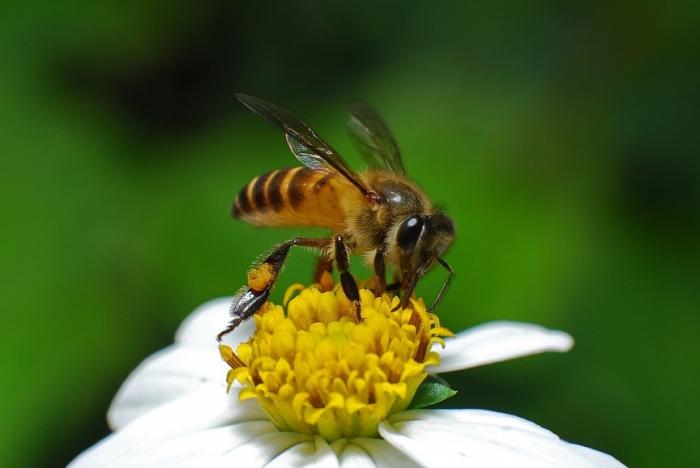 Топ-10 насекомых с самым болезненным укусом