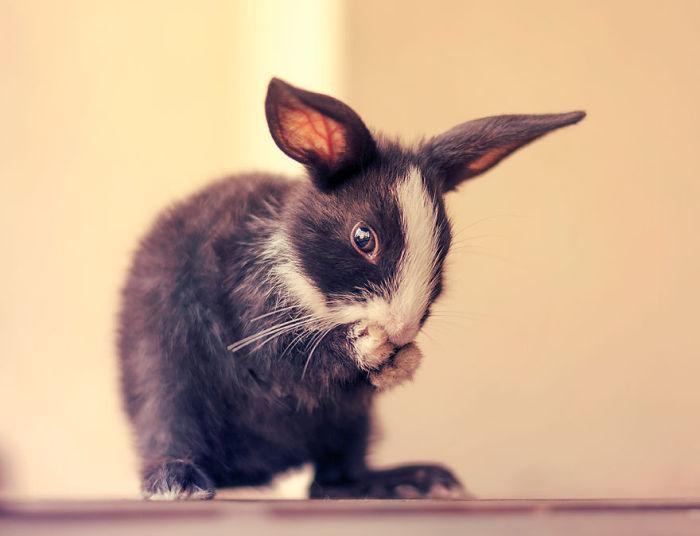 Как растет кролик