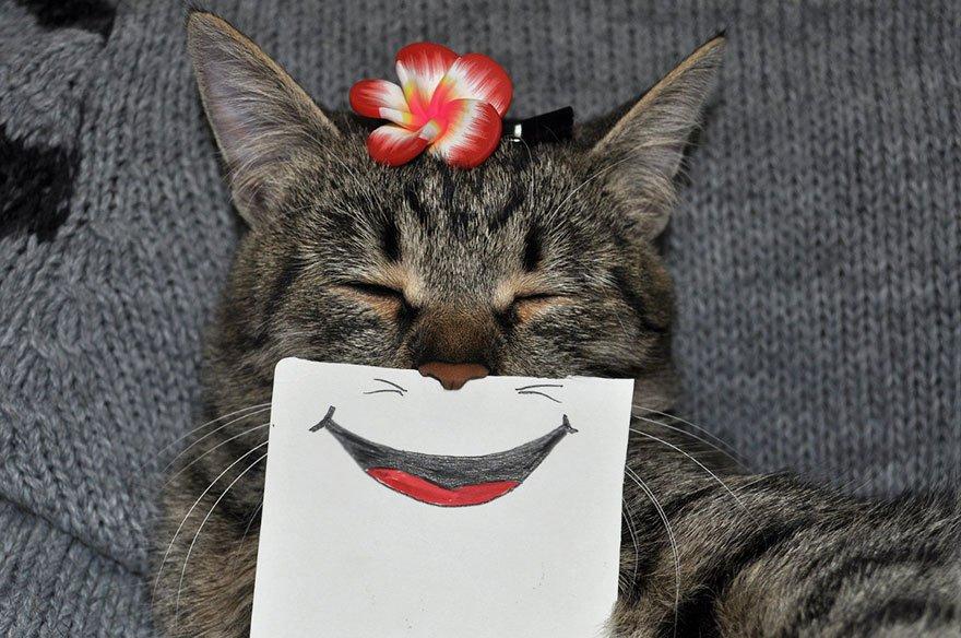 Эмоции моей кошки