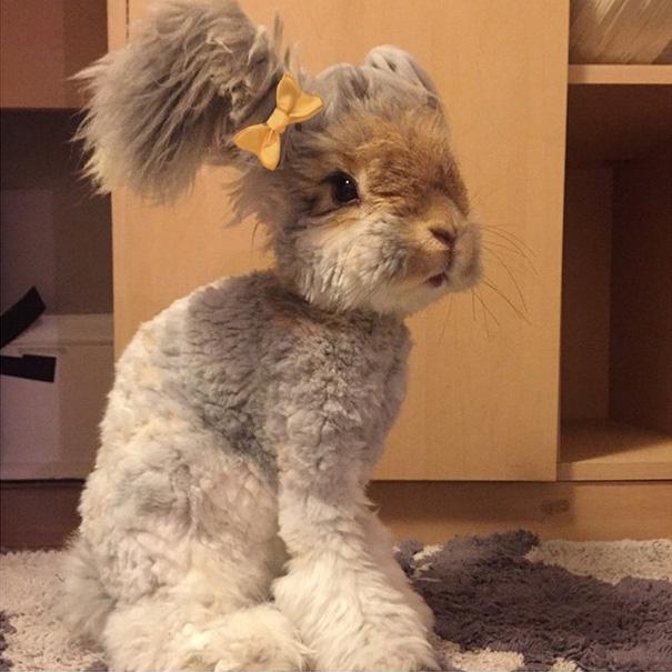 Милый ангорский кролик