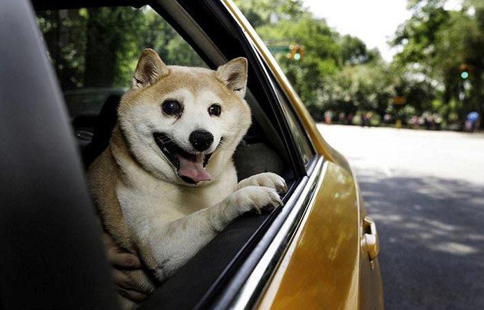 Самая улыбчивая собака в мине
