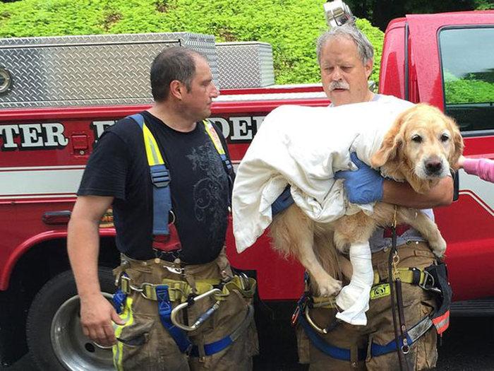 Героический поступок от собаки поводыря