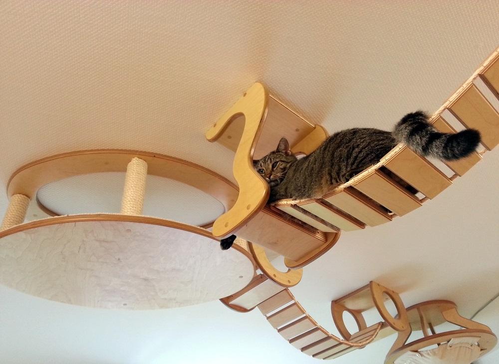 Сделать лазелку для кошки