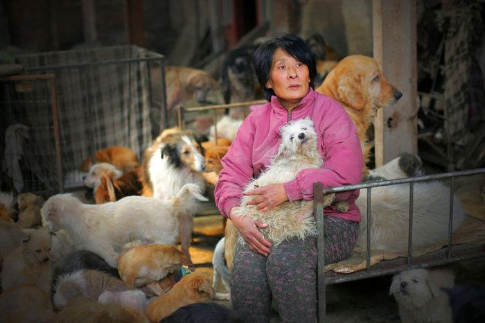 Женщина спасла спасла 100 собак от смерти