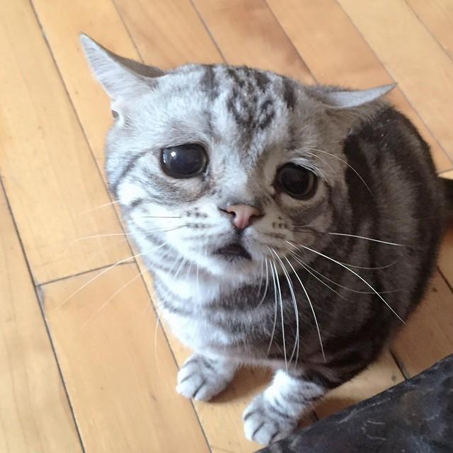 Печальная кошка по кличке Луху
