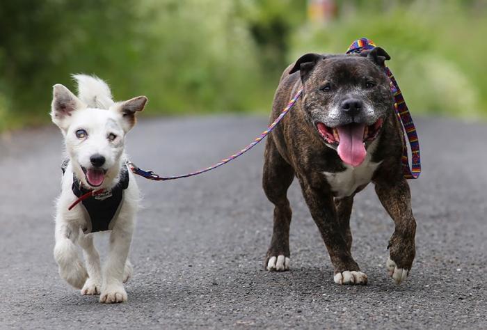 Невероятная дружба двух собак