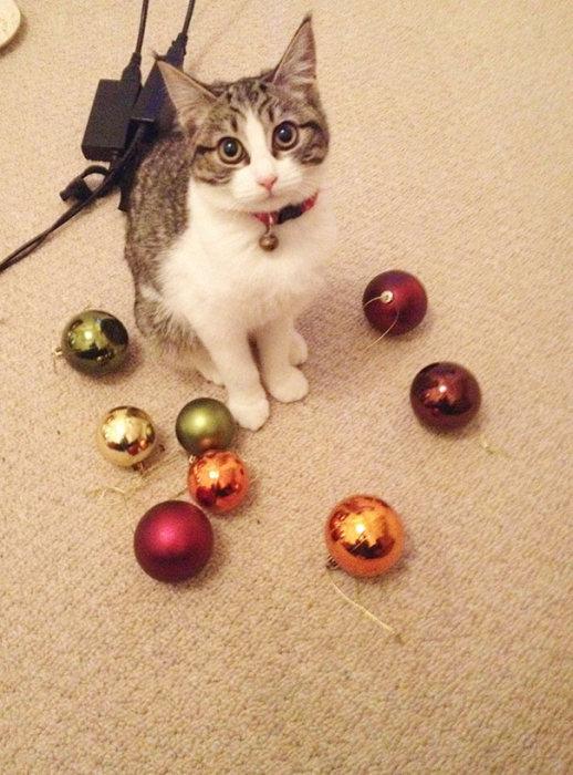 Кошки, которые любят собирать различные вещи