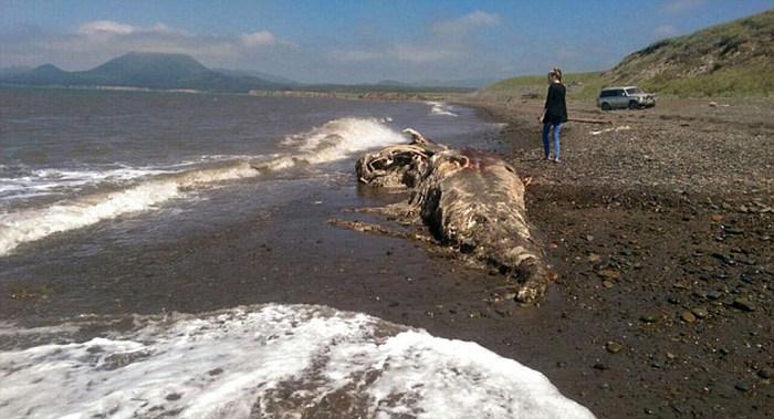 У берегов Шахтерска обнаружили останки неизвестного животного