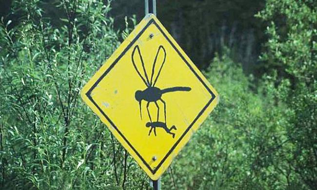 Почему комары кусают некоторых людей больше других?