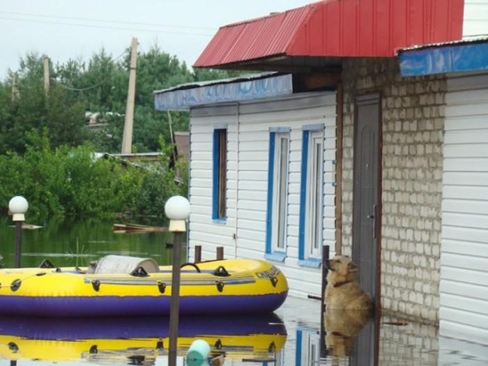 В Благовещенске появился памятник собаке по кличке Дружок