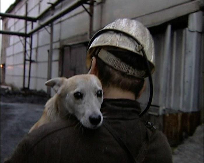памятник собаке-горняку