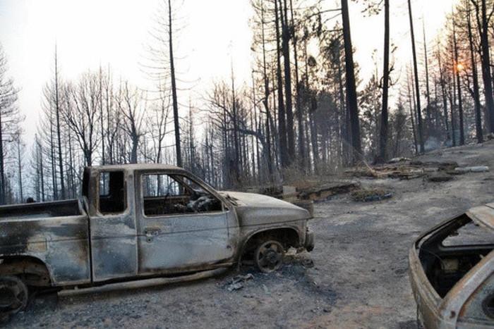 В Калифорнии кошка пережила лесной пожар