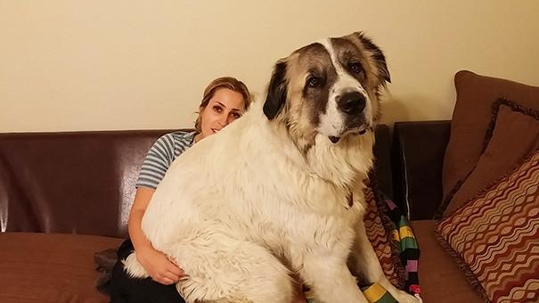 собаки внушительных размеров