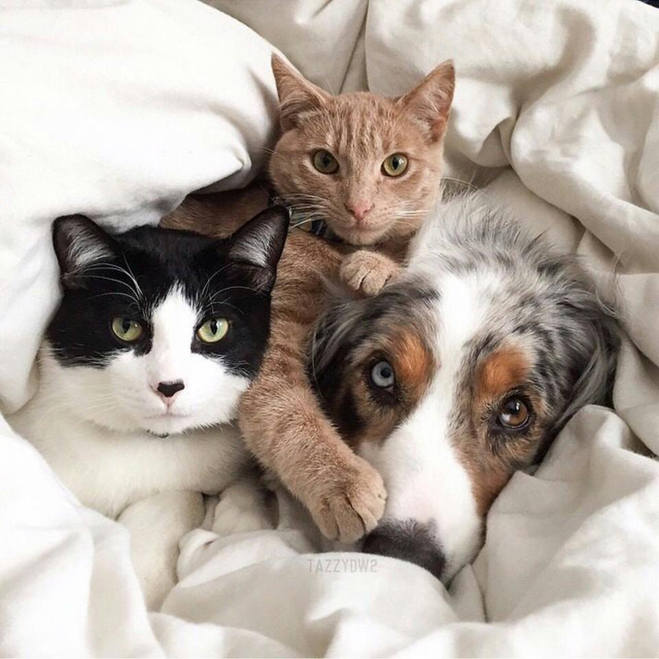 тебя картинки собак и кошек забавные заняться куда