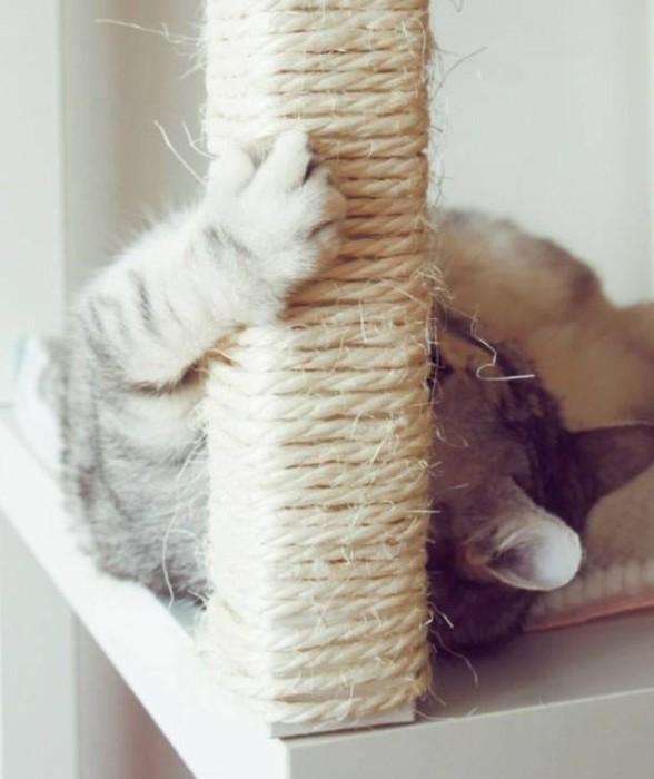 Полезные лайфхаки для тех, у кого есть кошки