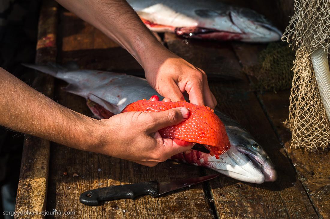 Как сделать из рыбных икр