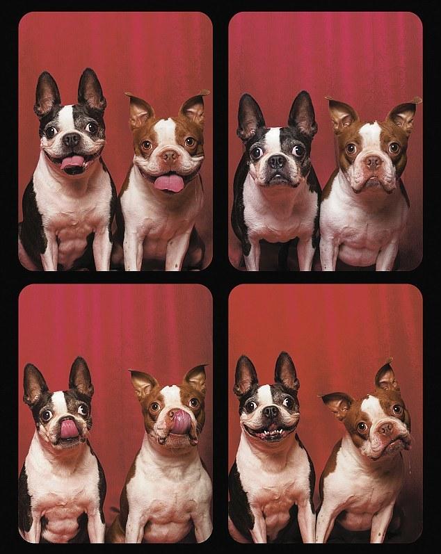 Фотографии собак сделанные в фотоавтомате