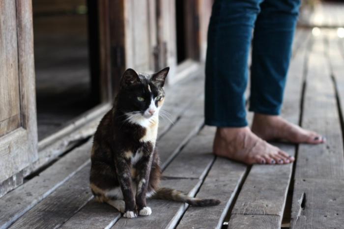 Почему кошки предпочитают одиночество?