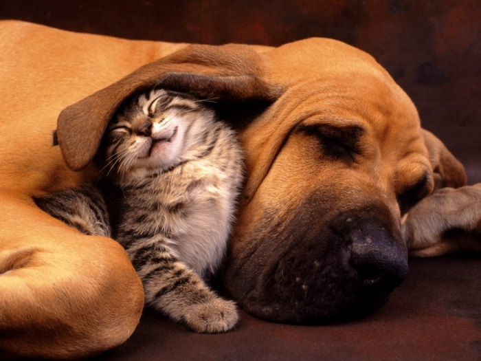 Как выглядит дружба кошек и собак (50 фото)