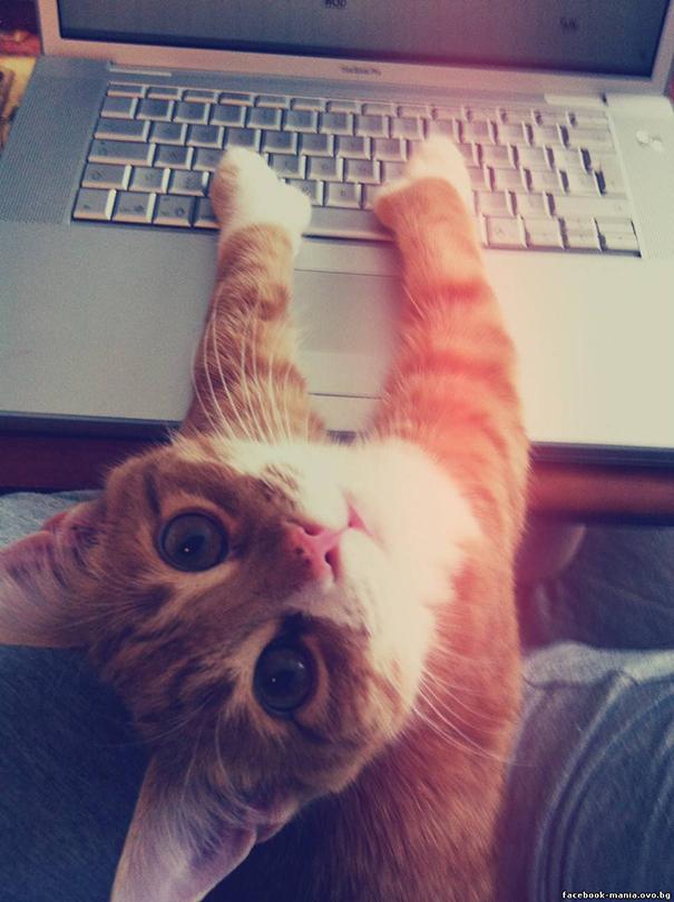 Коты которые плевали на ваше личное пространство