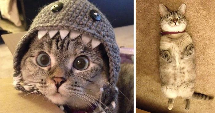 Самая популярная кошка инстаграма