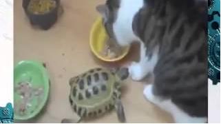 Черепашка-ниндзя разогнала всех кошек!