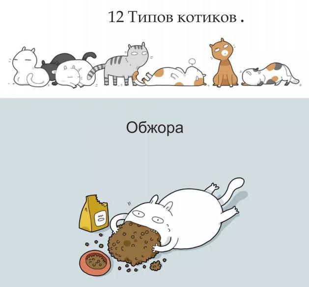 Классификация котов