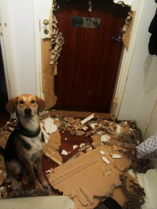 Нашкодившие домашние животные