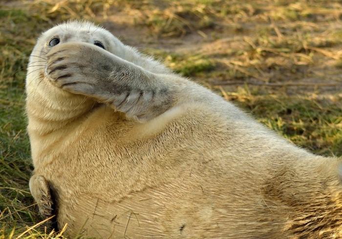 Финалисты конкурса «Смешные фотографии дикой природы»