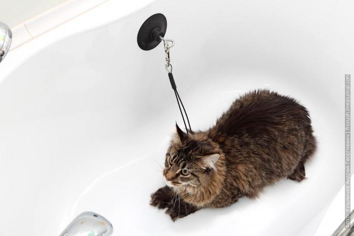 Как правильно помыть кошку и остаться в живых