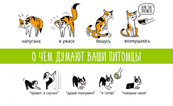 О чем думают домашние животные?