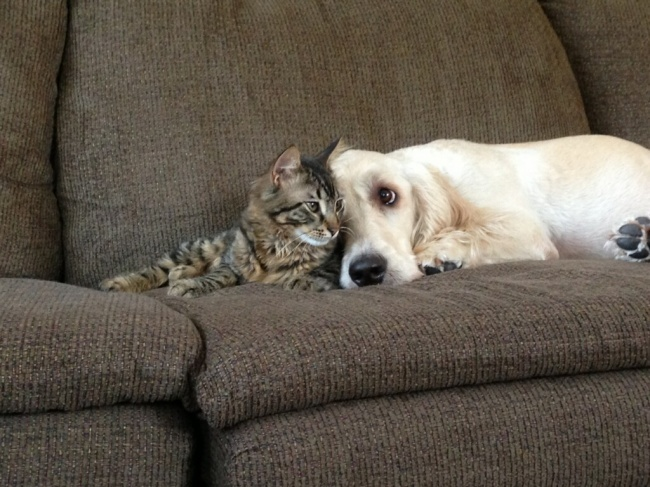 Кошки с собаками