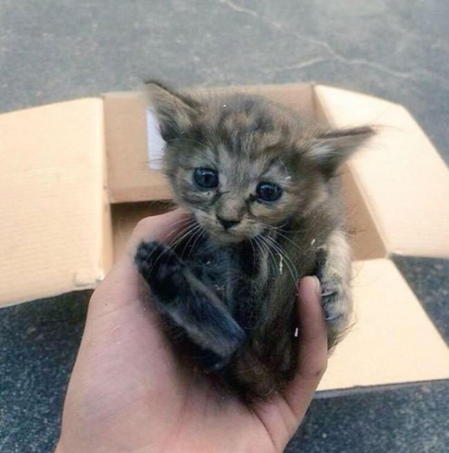 Котенок усыновленный хорьками
