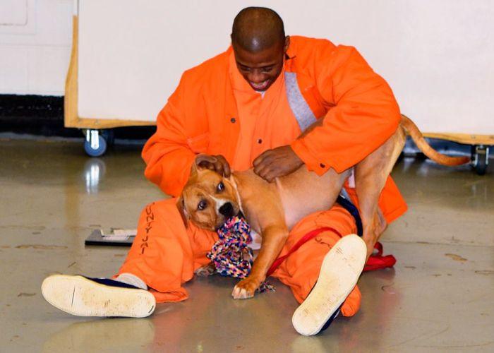 В тюрьме США заключенным разрешили брать на воспитание бездомных собак