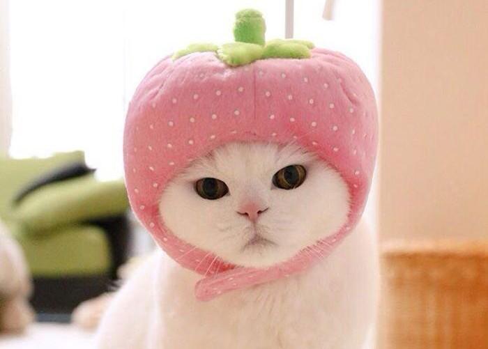 Милая кошка Ура