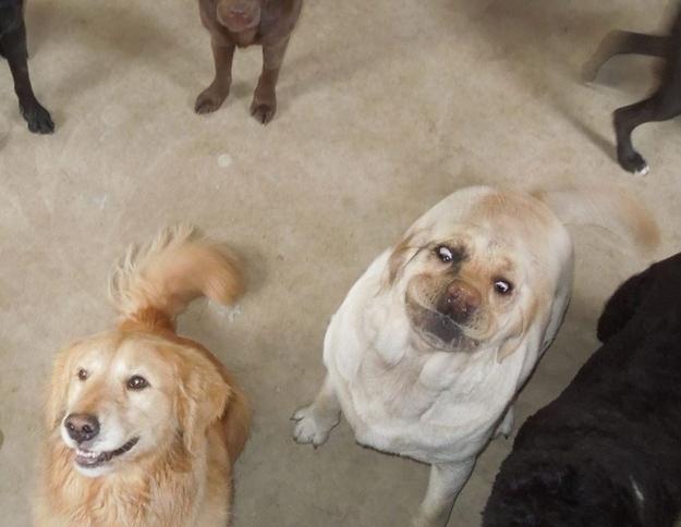 Самые странные фотографии собак