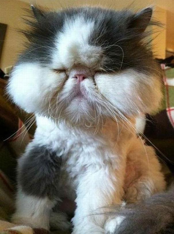 Фото кошки ужалила пчела