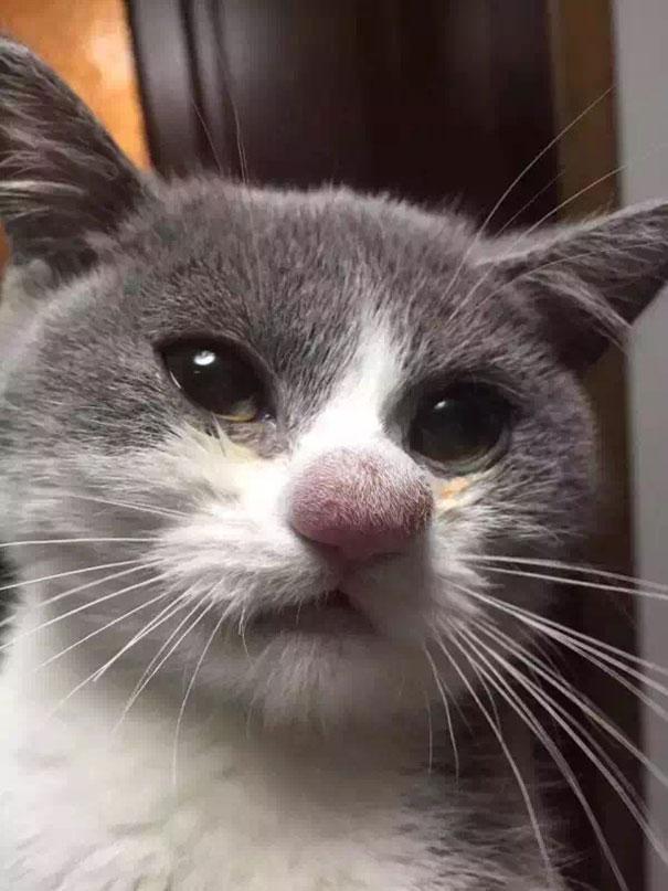 Фотографии котов ужаленных пчелами
