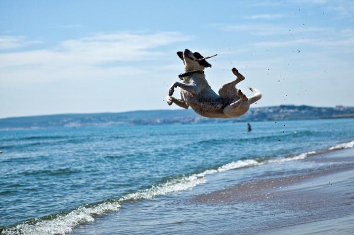 Фотографии собак которые бросили вызов гравитации