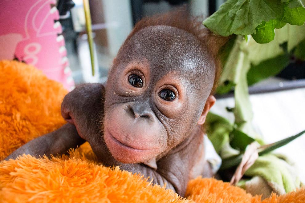 Красивые интересные картинки с животными