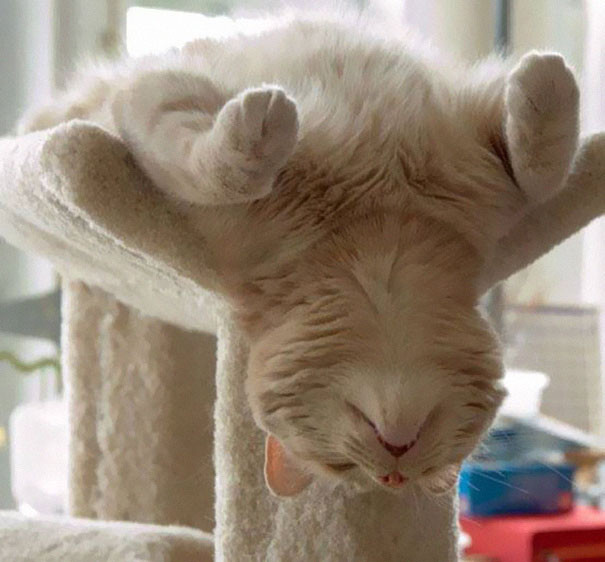 Коты могут спать где угодно!