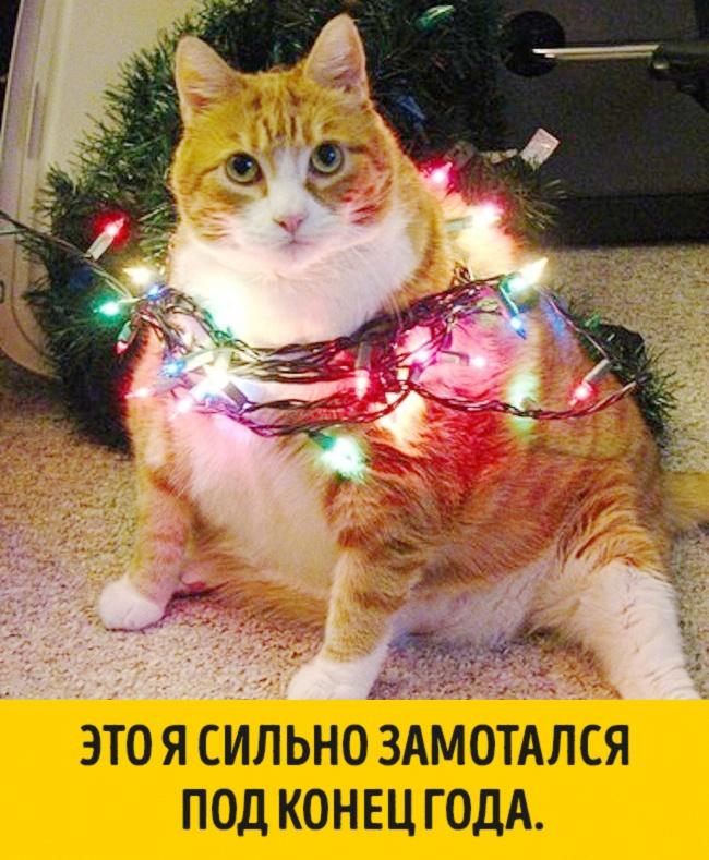 Животные, которые ждут Нового года