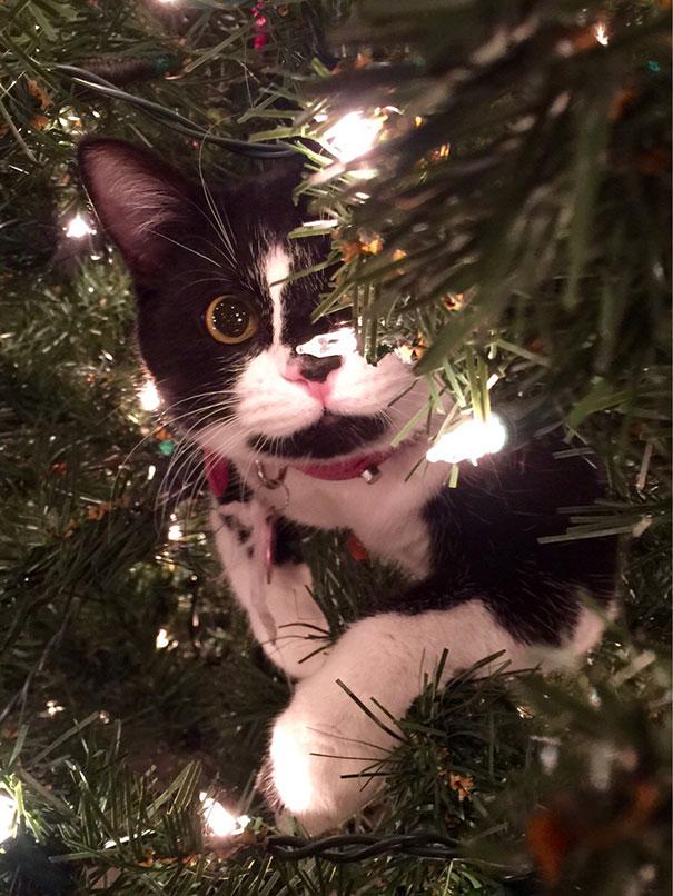 Коты и новогодние елки