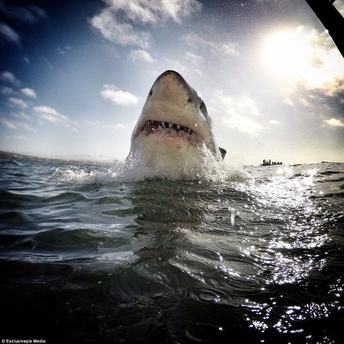 Акулы у берегов Южной Африки